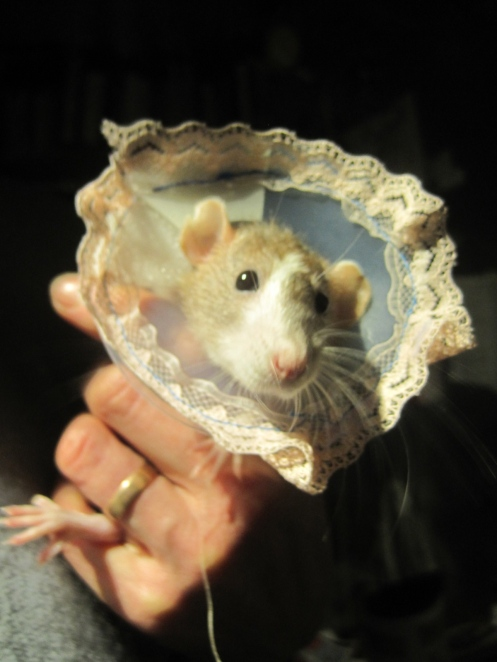 Bouquet of rodents for Post-Phelantine's Day